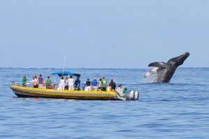 Photo credit: Pacific Whale Foundation.