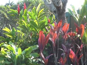 Tropicals at Travaasa Hana. Photo by Kiaora Bohlool.