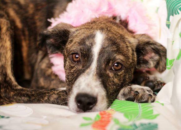 photo courtesy Maui Humane Society.