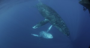 Photo by Jason Sturgis - NOAA permit #13846.