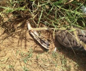 Albatross foot found at Kaena 12/29/15. Courtesy photo: DLNR.