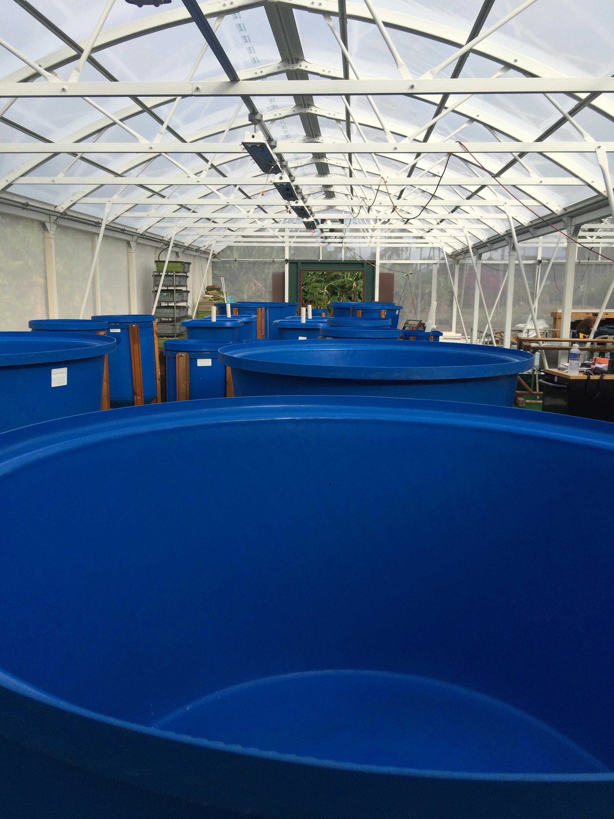 aquaponics greenhouse vert