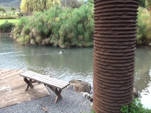 Ducks in the pond outside the Mill House restaurant at Maui Tropical Plantation. Photo by Kiaora Bohlool.