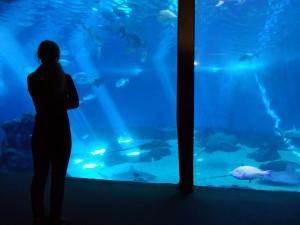 Shark tank proposal at the Maui Ocean Center, Jan. 18, 2016. Image credit: Maui Ocean Center.