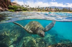 "Puʻu Kekaʻa ""Black Rock"" underwater image credit: Sheraton Maui Resort & Spa and Maui Ocean Center."