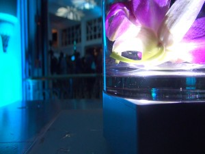 Tropical decor at Grand Wailea for Celebrity Chef Tour reception. Photo by Kiaora Bohlool.