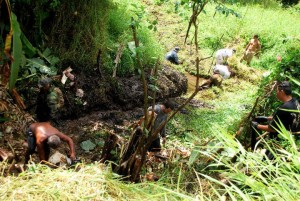 Ke'anae lowlands and Wailua Nui farmers clean distant ancient ditches in efforts to bring more water to the rural community kalo (taro) farming fields.