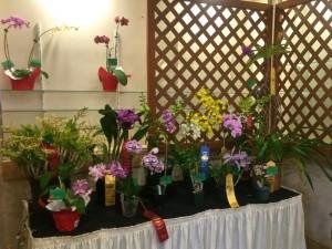 Photo credit: Maui Orchid Society.