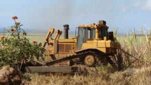 HC&S dozer harvesting sugar cane in Waikapū field. File photo by Wendy Osher.