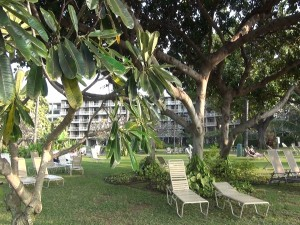 Grounds at Kā'anapali Beach Hotel, which will host a Mother's Day brunch on May 8.  Photo by Kiaora Bohlool.