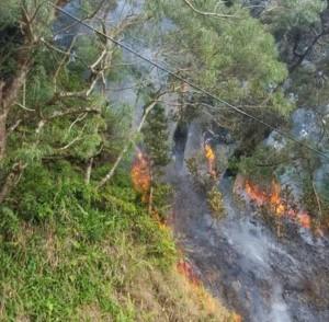 Wailuaiki Fire, Mile 20, Hāna Hwy. Photo credit: Kapena Kalama.