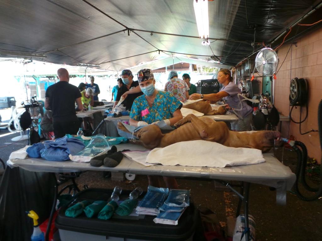 Spay/Neuter clinic. Images credit: Maui Humane Society.