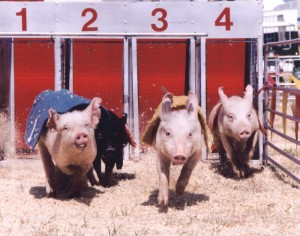 Pig Racing. Photo credit: E.K. Fernandez.