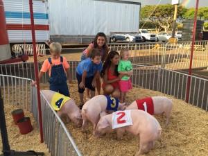 Pigs at 50th State Fair 2015. File photo credit: E.K. Fernandez.
