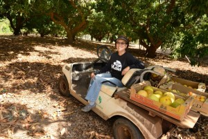 Yee's Orchard will be on hand at Maui County Ag Fest, in the Grown on Maui Farmers Market tent.