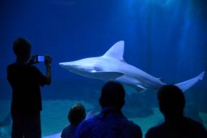 Sleep with the Sharks. Maui Ocean Center photo.