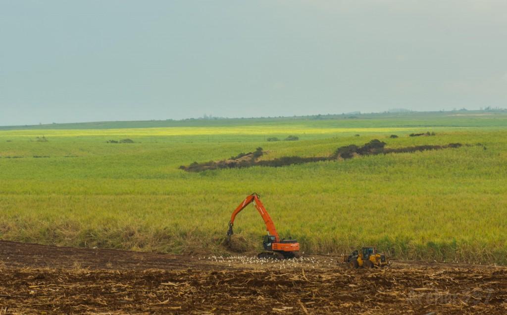 HC&S field work, final sugar harvest. Photo credit: Chris Archer.
