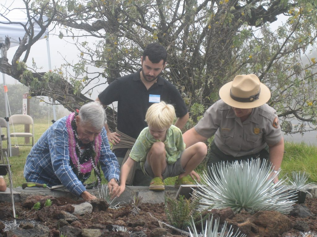 Uncle Rex and keiki planting silverswords--passing the torch of stewardship. Photo courtesy Haleakalā National Park.