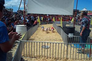 Hedrick's PIG RACES. E.K. Fernandez Shows.