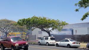 Fire at Island Movers on Alamaha St. (5/5/16) Photo credit: Al Patricio.