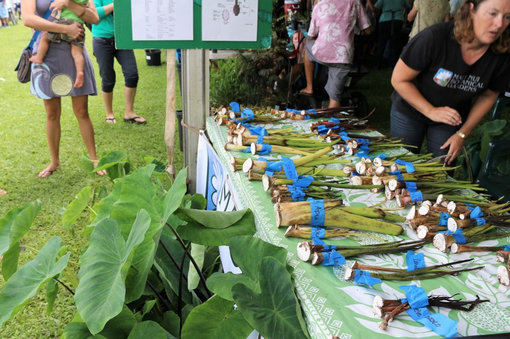 East Maui Taro Festival. Photo credit: Nicole Schenfeld.