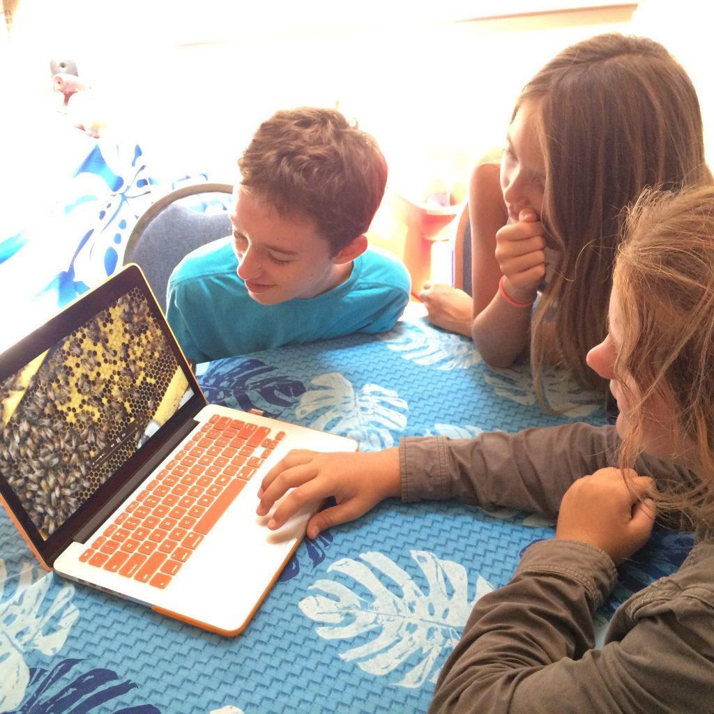 Maui Huliau Youth Environmental Film Festival.