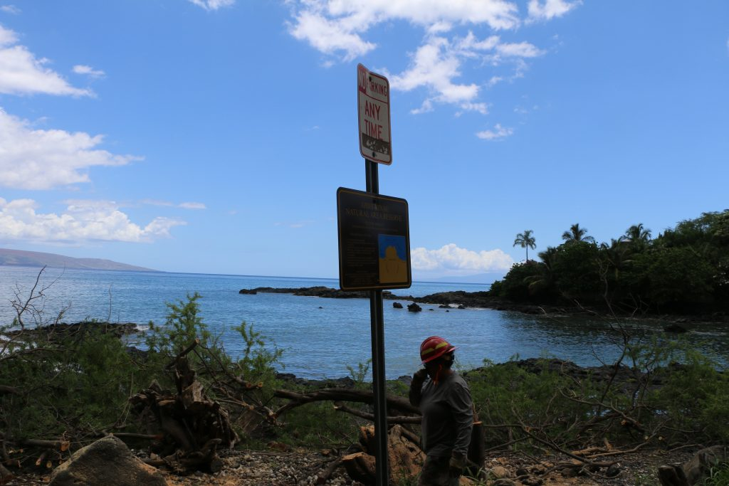 Kiawe trees being cut down and removed from ʻĀhihi-Kīna'u Natural Area Reserve on Maui's south shore. Image credit: DLNR.