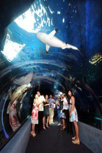 Night at the Aquarium. Maui Ocean Center photo.