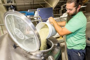 Hemp beer being made. Maui Brewing Co. will debut Hemp ESB on June 4. Courtesy photo.