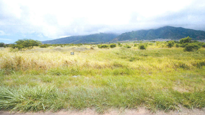 Waiʻale Affordable Housing project site facing west from Waiʻale Road. Image courtesy Bagoyo Development Consulting Group - Application for Affordable Housing Subdivision.
