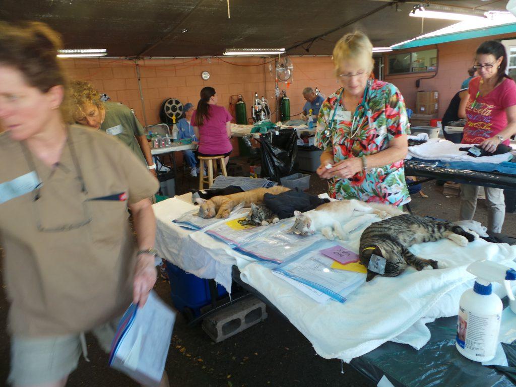 Photo courtesy: Maui Humane Society.