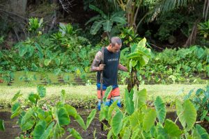 Chef Ed Kenney, host of Family Ingredients, in a taro patch on Kauai. Courtesy photo.