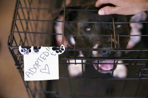 An adopted pet at Maui Humane Society. Courtesy photo.