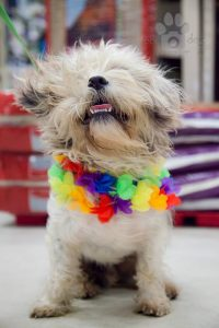 Happy dog at Maui Humane Society. Courtesy photo.