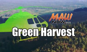 Green Harvest. Maui Now graphic.