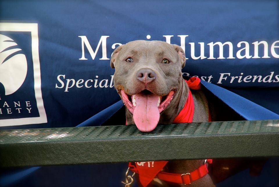 Maui Humane Society. Courtesy photo.