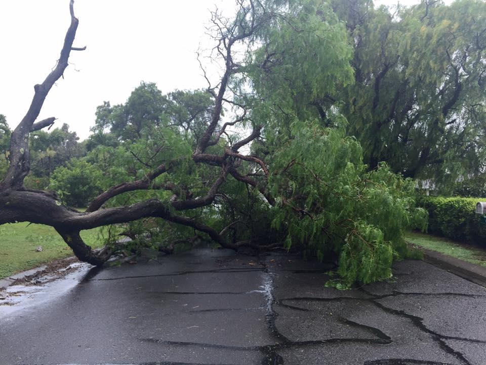 Makawao, Maui Uplands. TS Darby Maui storm impacts. (7.23.16) Photo credit: Marissa Meyer.