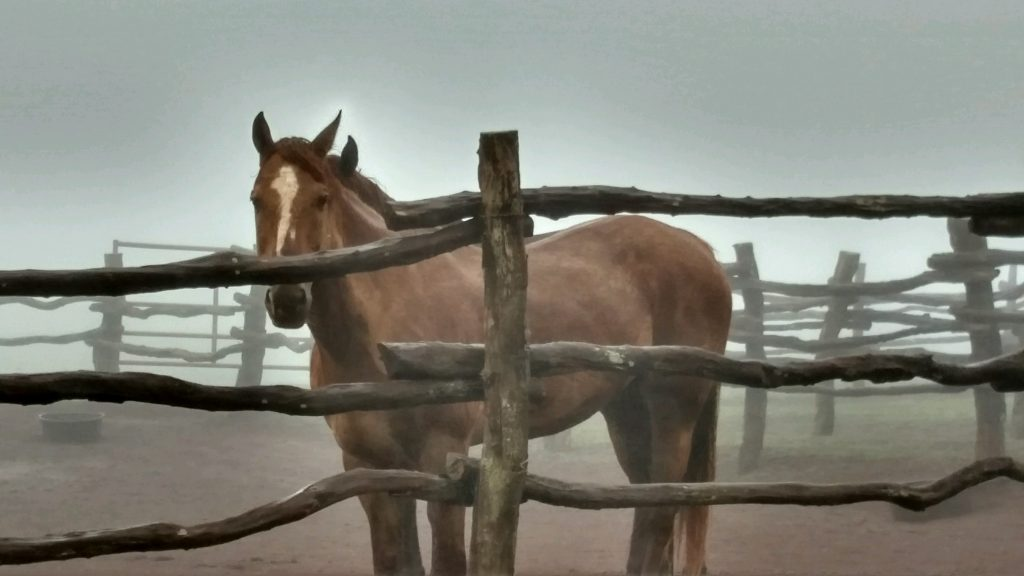 Lānaʻi Horses. Waiting out storm. Koele Stables. 12:24 pm 7/23/2016. Photo credit: Robin Rosenbalm-Fabrao