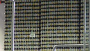 Wall of cans at Maui Brewing Co. Photo by Kiaora Bohlool.