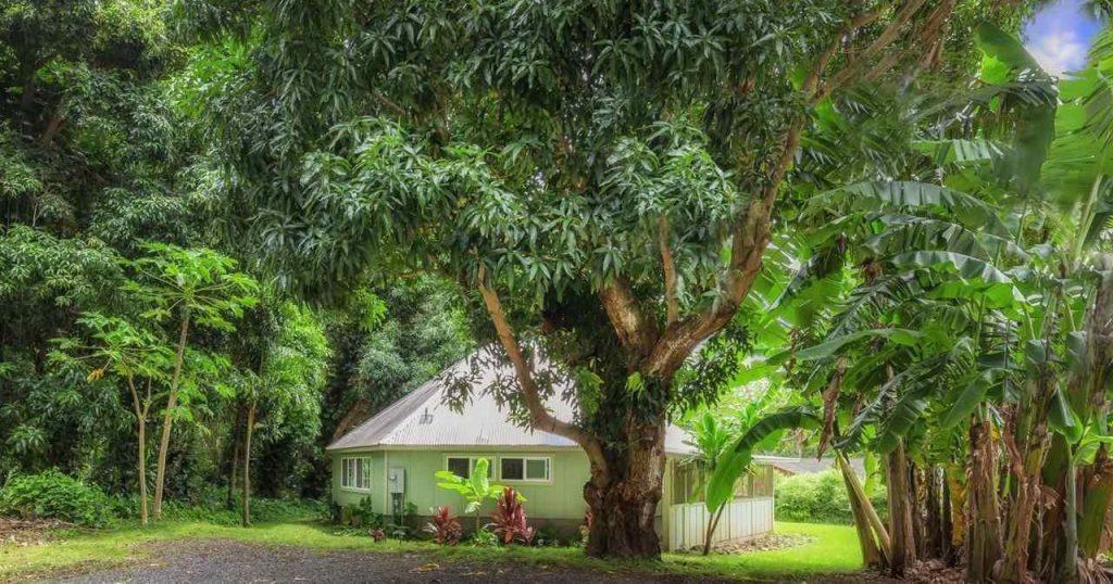 Jesse's List, Central Maui, 326 ʻĪao Valley Road, Wailuku. RAM image.