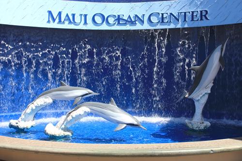 Maui Ocean Center | Maui Aquarium | Maui Things to Do