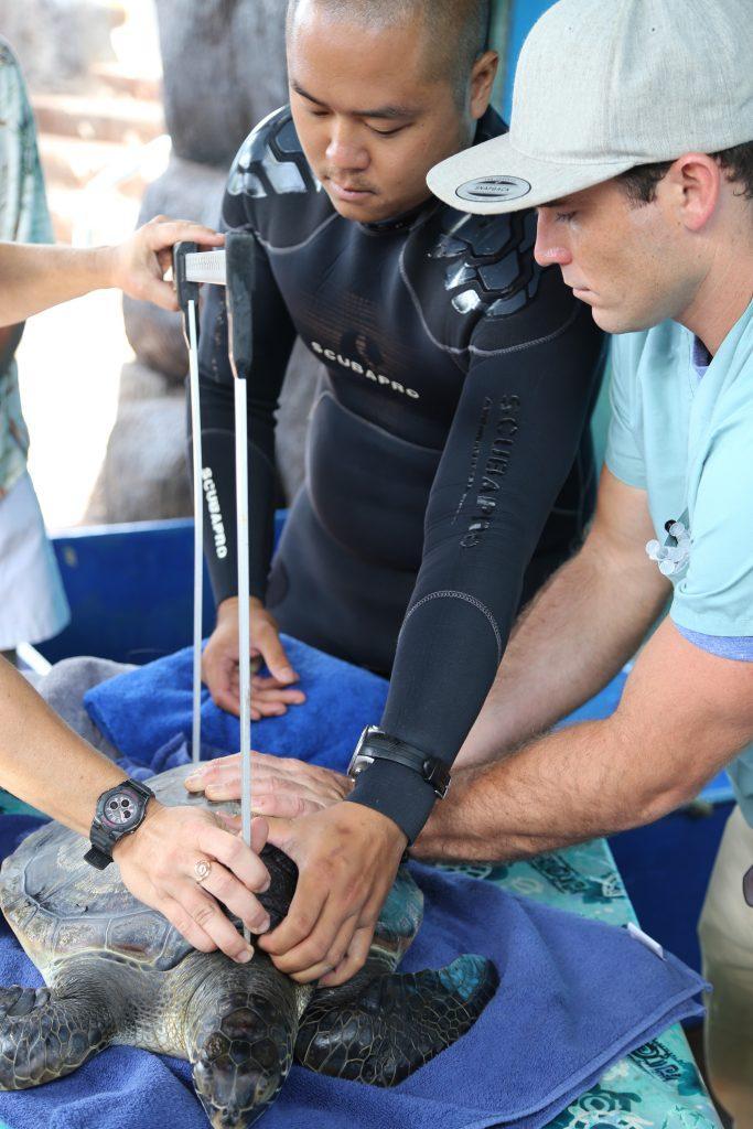 Aquarist Arik Dadez with Dr. McCurdy. Maui Ocean Center, turtle release planned.
