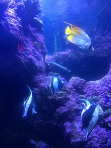 Reef fish at Maui Ocean Center's Night at the Aquarium. Photo by Kiaora Bohlool.