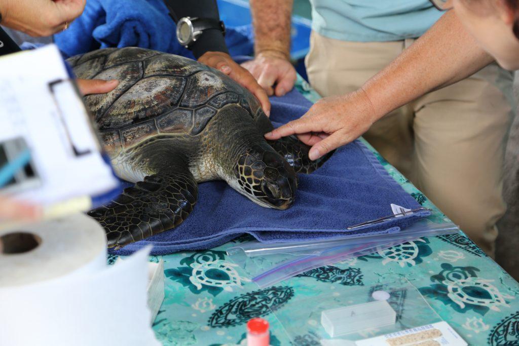 Turtle Checkup