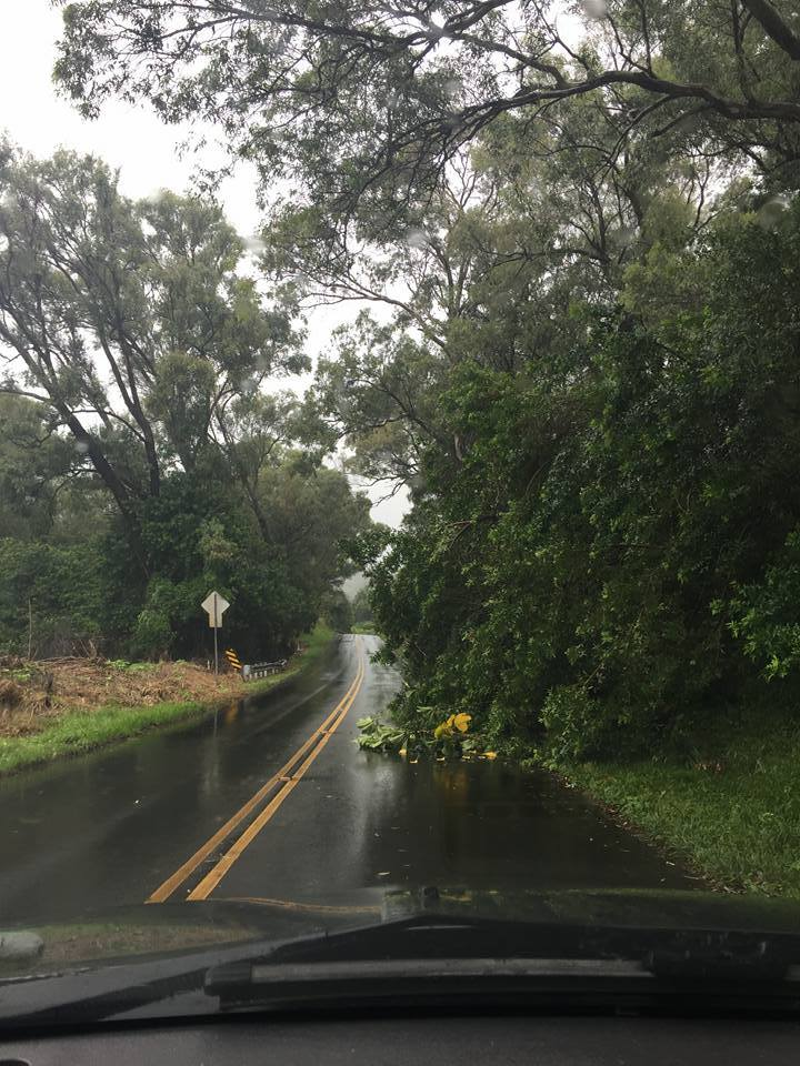 DOWNED TREE KALUANUI RD: 9:18 a.m. 9.3.16 on Kaluanui Rd in Haiku. At 9:14 a.m., the tree was blocking part of the lane heading into Haiku. PC: Nicole Schenfeld