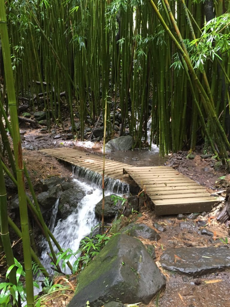 The last 1/2 mile of the Pīpīwai Trail, including the viewpoint for Waimoku Falls, is closed due to downed trees.