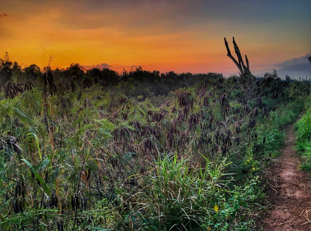 Mahana Ridge Trail. Photo Courtesy: Courtney Brown
