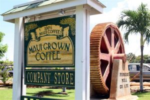 MauiGrown Coffee store in Lāhainā. Courtesy photo.