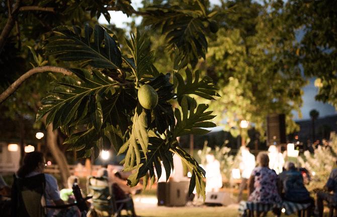 'Ulu tree lit by evening festivities at Moku'ula by Moonlight in Kamehameha Iki Park, Lahaina. Photo credit: J. Anthony Martinez
