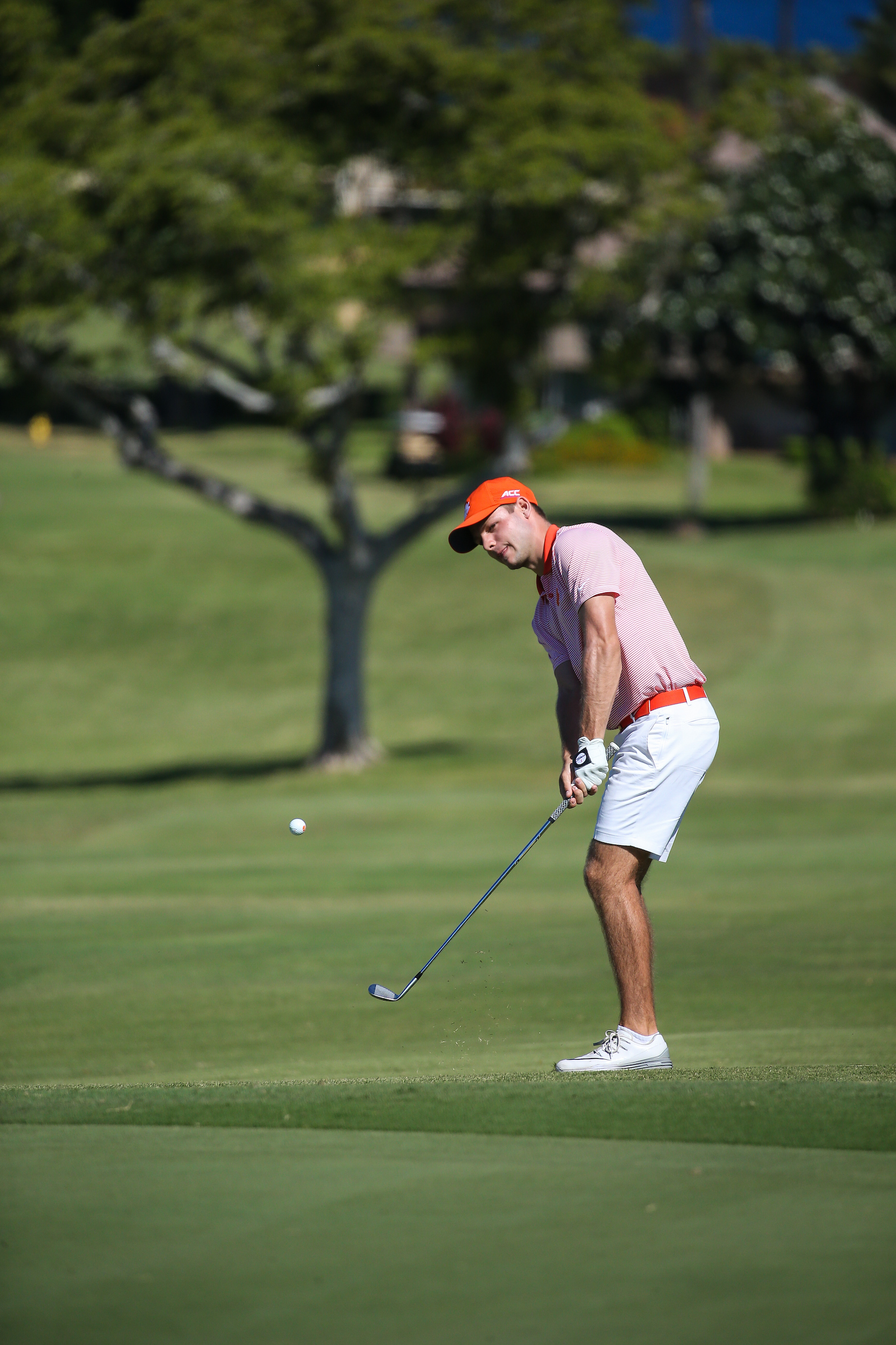 Doc Redman of Clemson chips in for eagle on number six during the final round of the 3rd annual Kaanapali Classic collegiate invitational. Kaanapali Royal Course Lahaina, Hawaii November 5th, 2016/ Photo by Aric Becker